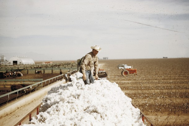 """Cotton Stomper,"" original photo by Marvin Morrison, interpreted by Gina DeGideo."